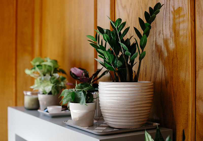 Spring Update Six Low Light Houseplants Warm Hot Chocolate