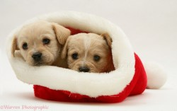Small Of Dogs In Hats