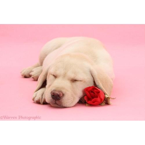 Medium Crop Of Cute Puppies Sleeping