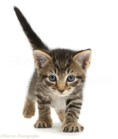 Medium Of 5 Week Old Kitten