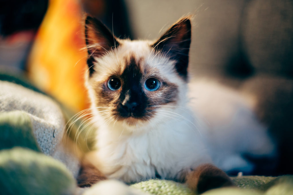Hd Fall Wallpapers Phone Enter Our Cutest Cat Contest
