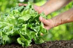 Amazing Salads Pulled Amid Cyclospora Outbreak Washington Post Salads Pulled Amid Cyclospora Outbreak Mcdonald S Southwest Salad Healthy Mcdonald S Southwest Salad Calories