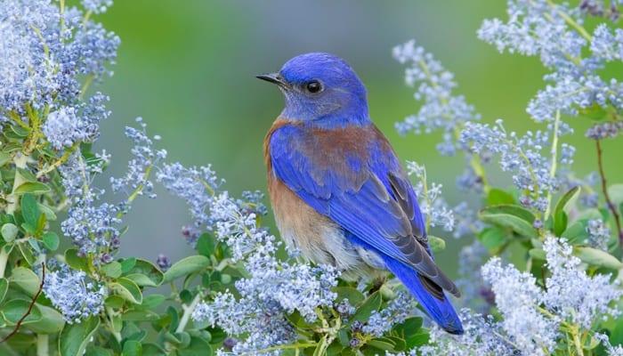Stores That Have 3d Wallpaper Bluebirds Wild Birds Unlimited Wild Birds Unlimited