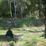 Wild-Africa-Trek-wdwradio-702