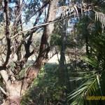 Wild-Africa-Trek-wdwradio-709