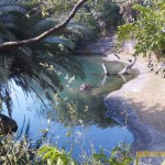 Wild-Africa-Trek-wdwradio-727