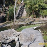 Wild-Africa-Trek-wdwradio-778