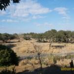 Wild-Africa-Trek-wdwradio-821