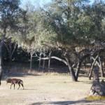 Wild-Africa-Trek-wdwradio-844
