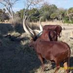 Wild-Africa-Trek-wdwradio-850