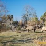 Wild-Africa-Trek-wdwradio-900