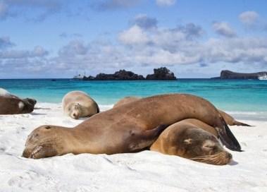 Galapagos eilanden Daphne