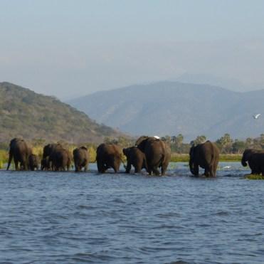 Olifanten malawi