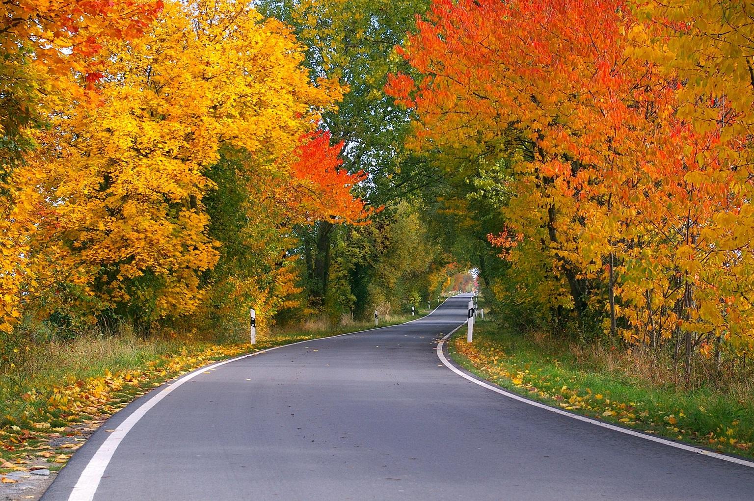 Fall Leaves Road Wallpaper Fall Colors Report