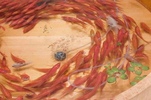 pinturas-goldfish-hiperrealistas-riosuke-fukahori-08
