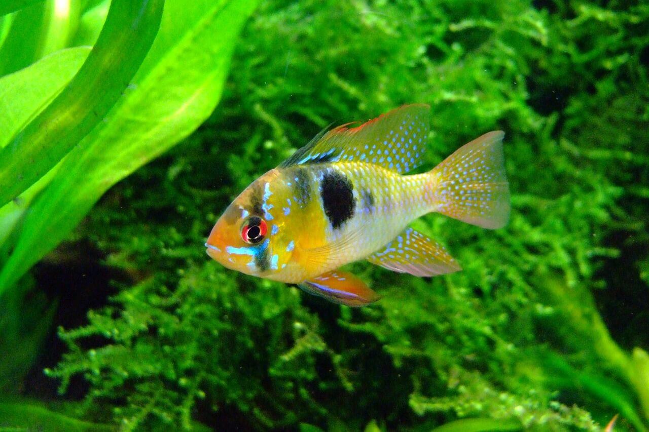 3d Fish Tank Wallpaper Tipos De Peces Webanimales Com