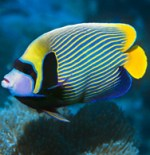 Freshwater Fish Freshwater Tropical Fish Species For