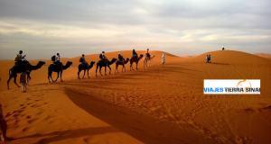 caravana-desierto-egipto