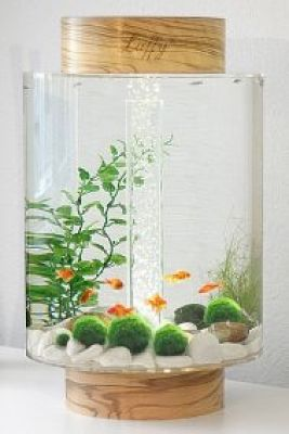 Marimo is a very popular plant in Japan. The Japanese believe that the Marimo will bring good luck.
