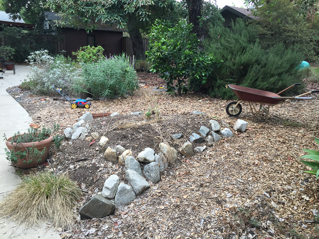 Wild Backyard Garden : backyard garden