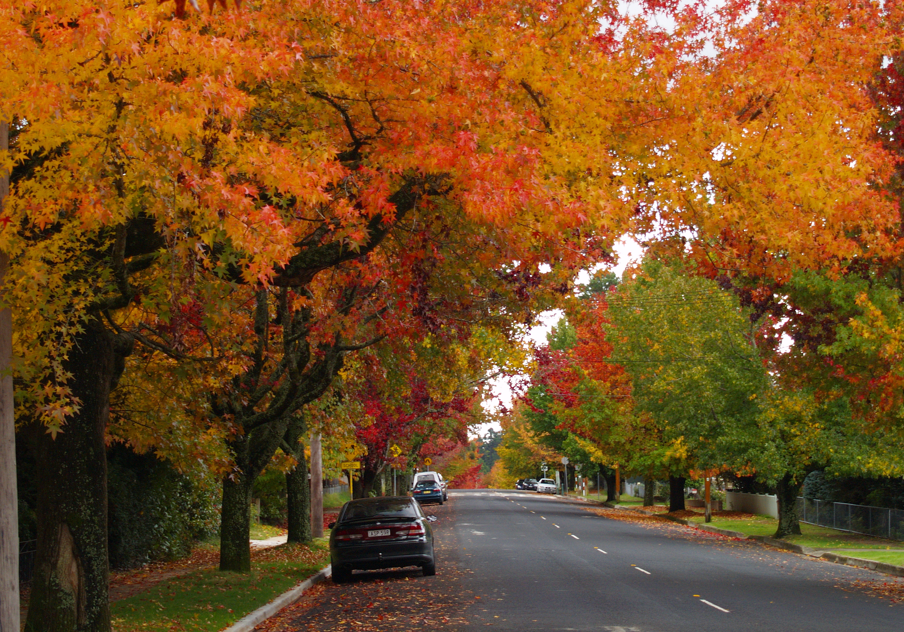 Free Fall Foliage Wallpaper Where Can You See Autumn Trees In Nsw Sydney