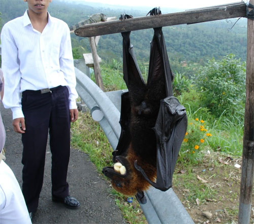 >Off-topic Friday: Huge-ass bat.
