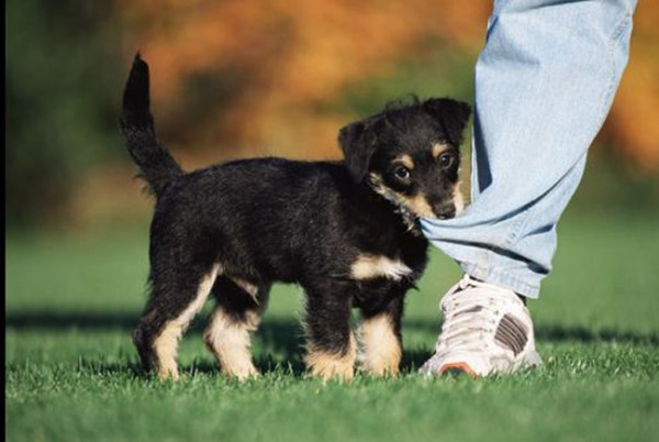 Puppy battling the evil of Misandric Pants