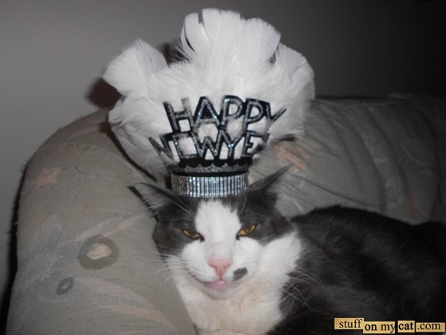 Happy New Year! Also, a cat