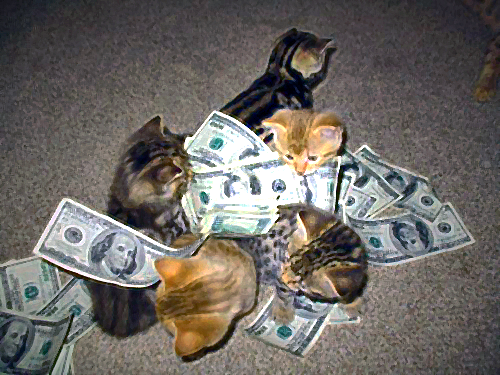 Kittens love money.