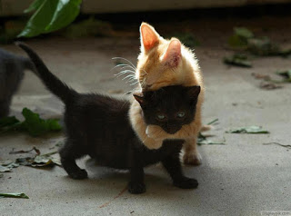 Open Thread for Personal Stuff: Late July 2015 Kitten Hug Edition