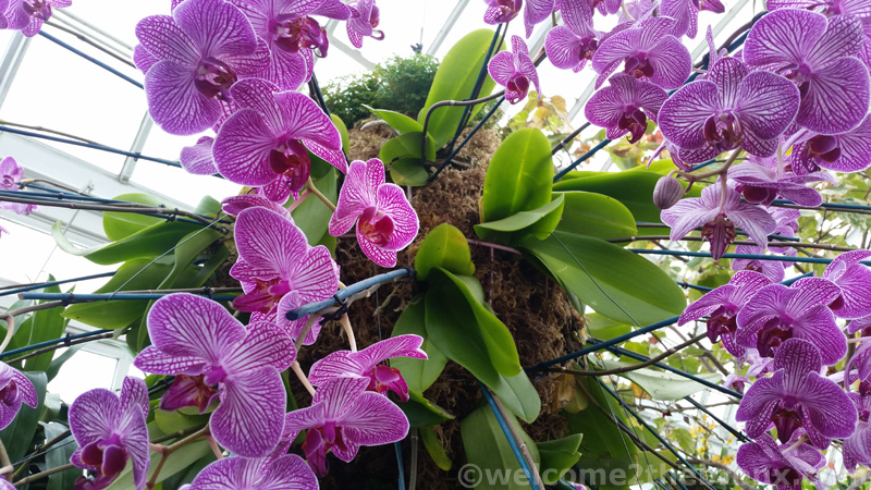 The Orchid Show Returns To The New York Botanical Garden