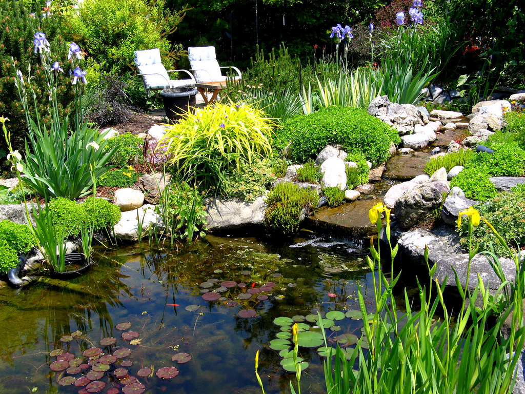 Native plants for a pond