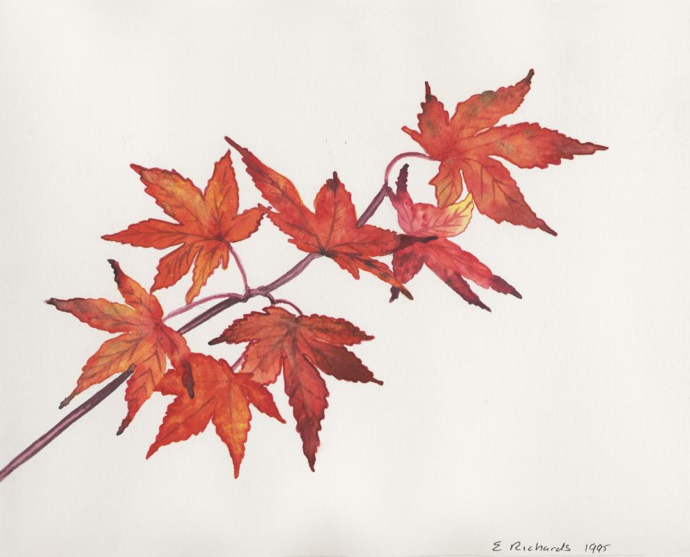Fall Heart Leaves Background Wallpaper Japanese Maple Leaves