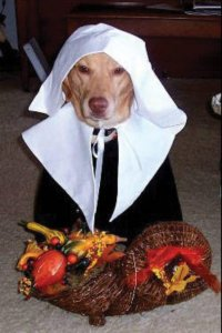The gallery for --> Dog Thanksgiving Costume