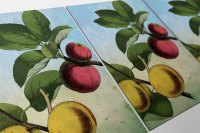 Kitchen Wall Art Apple Apricot Print Kitchen Print Food ...