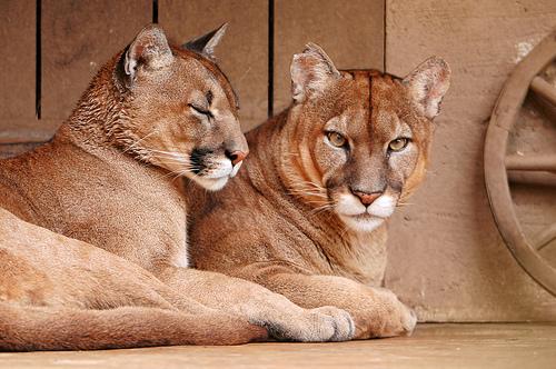3d Cat Wallpaper Hd 12 Cutest Animal Couples Welovedates