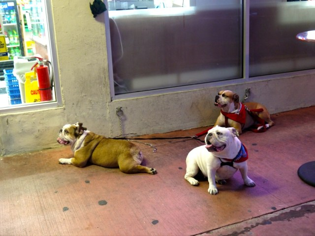 outside_shop_3_dog
