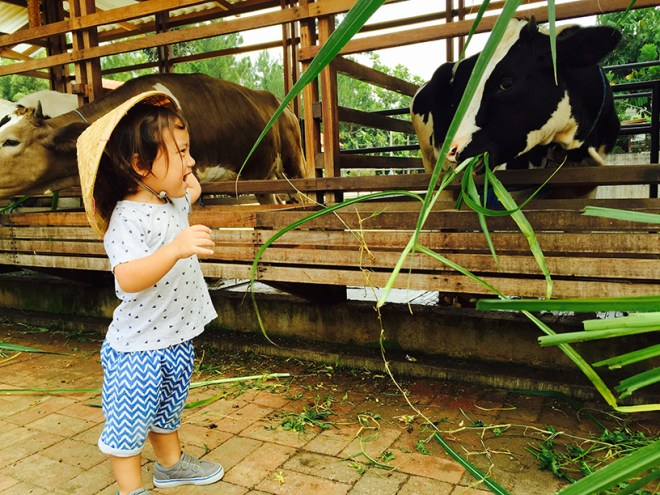 Tasha May_We love jakarta_Kuntum Nurseries_feeding cows grass