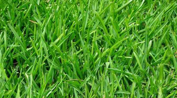 Erotisches Gras zum Frauen befriedigen