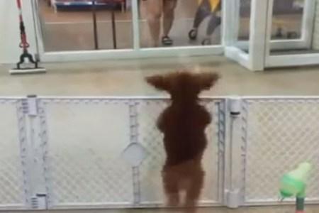 tanzender Hund