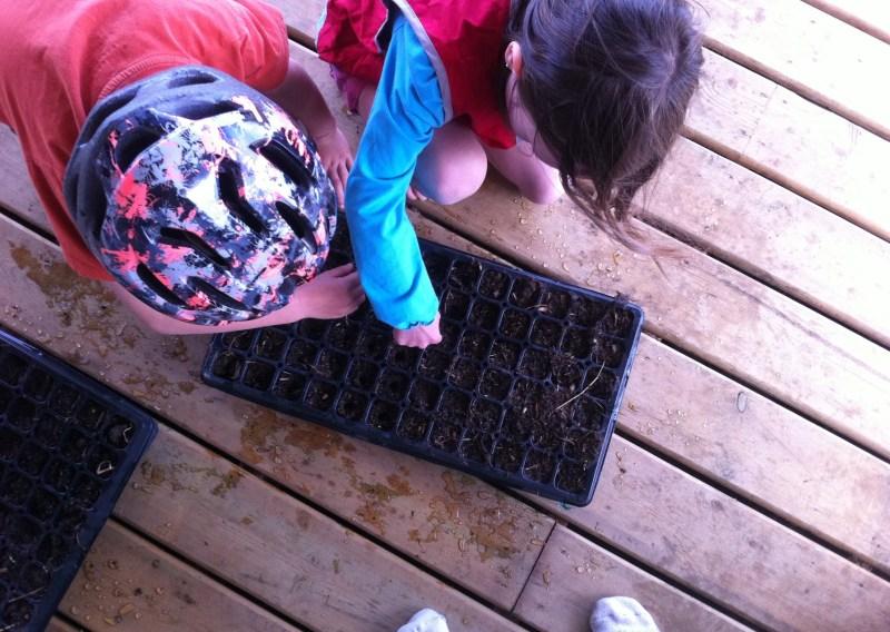 Starting seeds.
