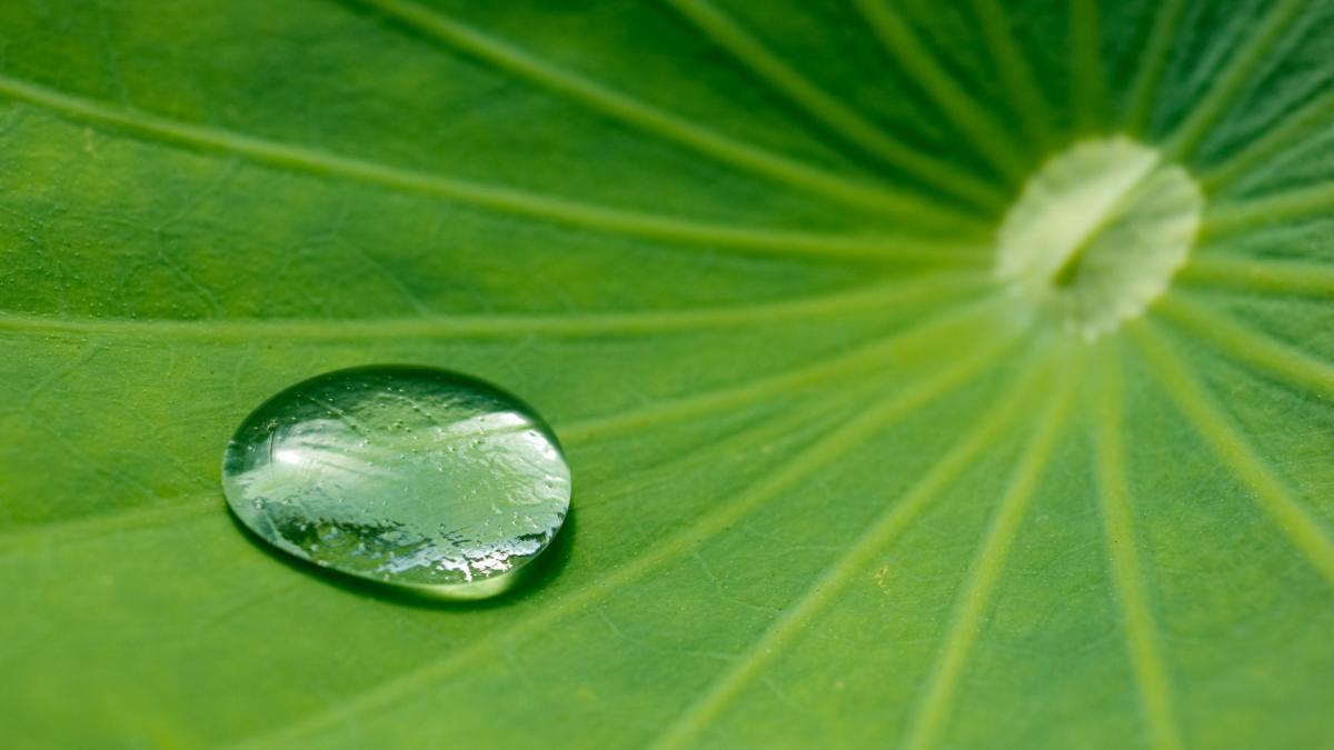 Falling Leaves In Water Live Wallpaper Technik Bionik Die Natur Als Vorbild Bilder Amp Fotos