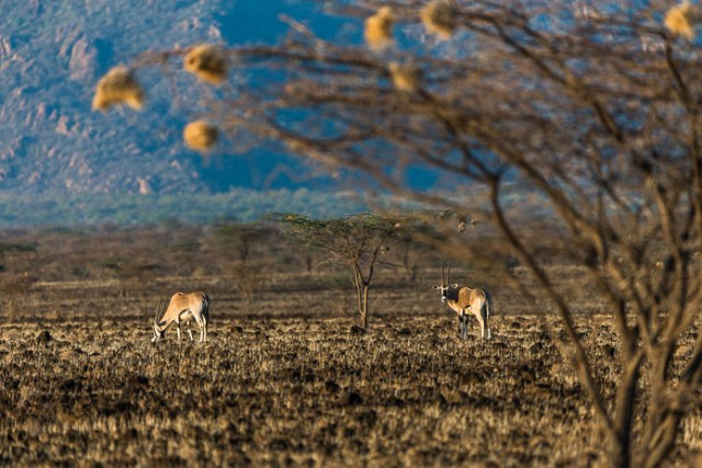 Northern Frontier, Kenya, Africa