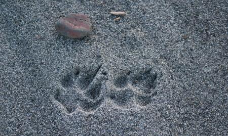 werewolf beach