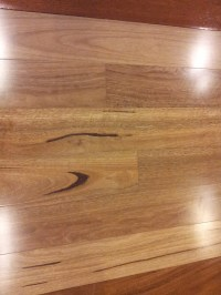 Spotted Gum - West Lake Flooring