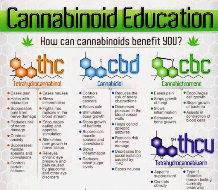 Cannabinoid education Natural muti Pinterest Cannabis - height weight chart