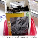 Indoor Root Vegetable Garden