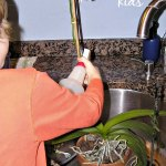 Practical Life: Plant Care