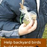 How to Help Backyard Birds Build Their Nests