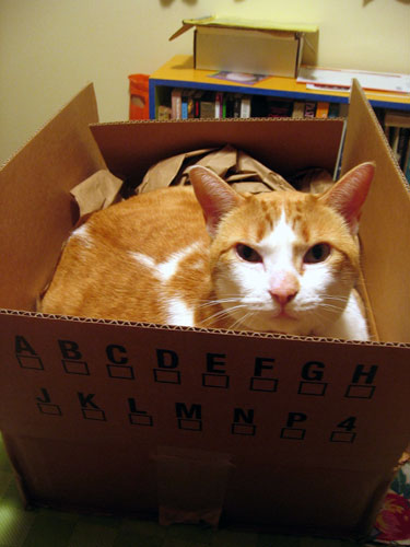Damian in the box